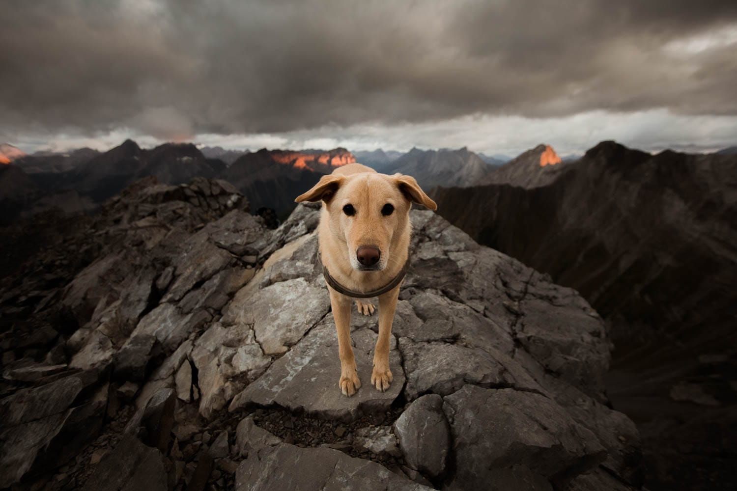 dog on top of mountain at sunrise