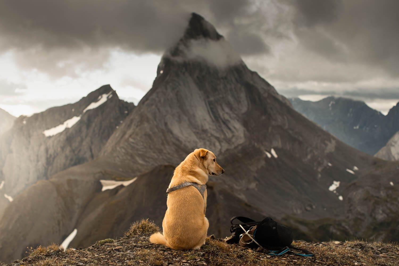 Dog Sitting with Banff Engagement Photographer
