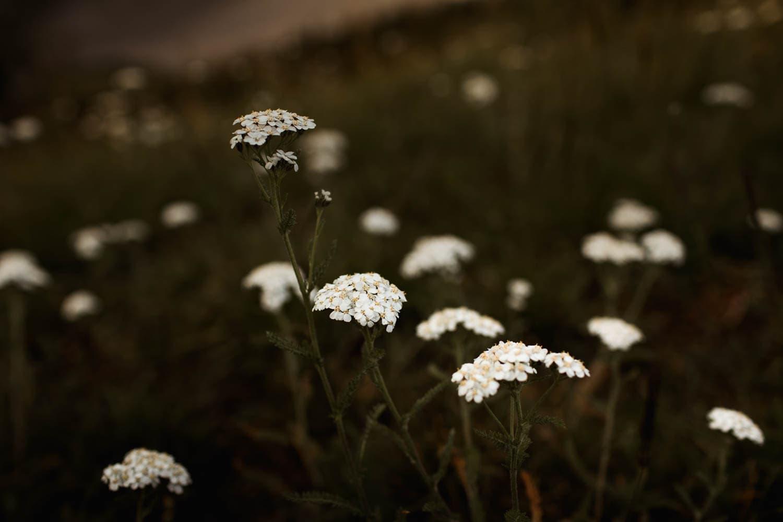 Kananaskis Wildflowers